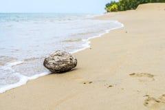 wyspy plażowy kokosowy margarita Venezuela Obraz Stock