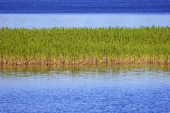 wyspy turzyca Obraz Stock