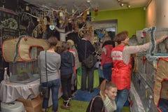 Wystawa i dystrybucja koty od schronienia Obraz Royalty Free