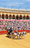 Wystawa końscy frachty, Maestranza, Seville, Hiszpania Fotografia Royalty Free