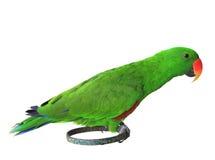 Wystawiać rachunek zielone papugi zieleni papugi umieszcza na statywowym isola Obraz Royalty Free