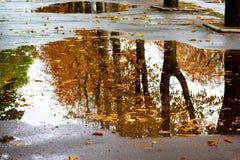 Wystawiający w kałuży drzewa w spadku Mokrzy żółci jesień liście unosi się w kałuży water_ zdjęcia stock