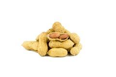 Wysuszeni arachidy wewnątrz na bielu Zdjęcia Stock