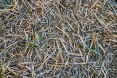 Wysuszeni bambusów liście na podłoga Zdjęcia Stock