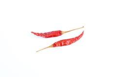 Wysuszeni Cali Czerwoni Chillies na bielu Zdjęcia Royalty Free