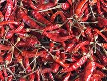Wysuszeni czerwoni pieprze lub czerwoni chillis Obrazy Stock
