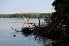 Wysuszeni drzewa na Danube (2) Zdjęcia Stock