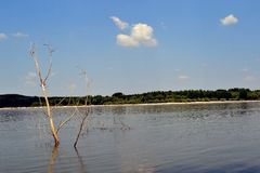Wysuszeni drzewa na Danube (1) Obraz Royalty Free