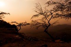 Wysuszeni drzewa z widokami górskimi Zmierzch Obrazy Royalty Free