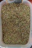 Wysuszeni herbaciani liście jako tło, zbliżenie Zdjęcie Royalty Free