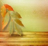 Wysuszeni jesień liście kłama na tle Zdjęcia Royalty Free