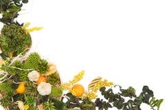 Wysuszony ziele tło Obrazy Royalty Free