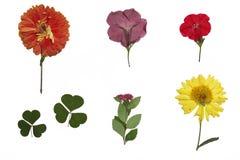 Wysuszeni kolorowi ogródów kwiaty, herbarium i Zdjęcie Royalty Free