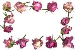 wysuszeni kwiaty Obrazy Royalty Free