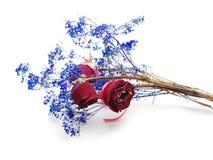 wysuszeni kwiaty fotografia royalty free