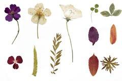 Wysuszeni kwiaty i herbarium Fotografia Royalty Free