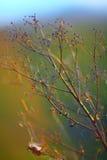 Wysuszeni kwiaty i rośliny na tło zmierzchu Obraz Stock