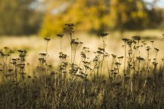 Wysuszeni kwiaty na łące w jesiennym słonecznym dniu Zdjęcia Royalty Free