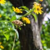 Wysuszeni kwiaty na tle żółte rośliny z słońcem Zdjęcia Royalty Free