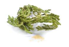 Wysuszeni leczniczy ziele surowi materiały odizolowywający na bielu Roślina dowcip Fotografia Stock