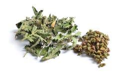 Wysuszeni leczniczy ziele surowi materiały na bielu Opuszcza wi Obrazy Royalty Free