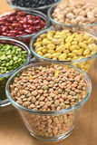Wysuszeni Legumes Obraz Stock