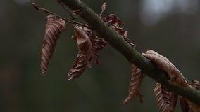 Wysuszeni liście na drzewie zbiory
