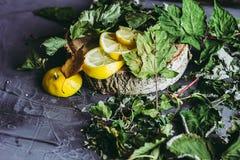 Wysuszeni liście porzeczkowy kłamstwo na szarym tle, sezon zimna, zimno, cytryna segmenty, herbata, herbata dla zimna, ziołowa he Zdjęcie Stock