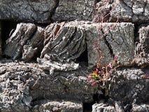 wysuszeni murawy roślinności potomstwa Zdjęcia Royalty Free