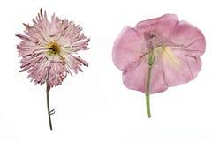 Wysuszeni ogródów kwiaty Obraz Royalty Free