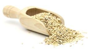 Wysuszeni organicznie sezamowi ziarna w drewnianej miarce na białym tle zbiory