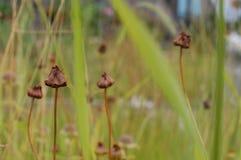 Wysuszeni pączki r w polu trawy Obraz Royalty Free