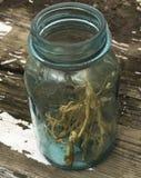 Wysuszeni Pokrzywowi korzenie w Błękitnym rocznika słoju Fotografia Royalty Free