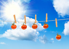 Wysuszeni słońce Pomidory Zdjęcia Stock
