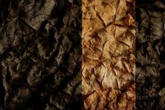 Wysuszeni tytoni liście jako tło Zdjęcie Royalty Free