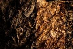 Wysuszeni tytoni liście jako tło Obraz Stock