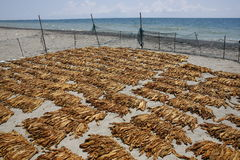 Wysuszeni tytoni liście na brzeg Fotografia Royalty Free