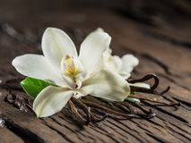 Wysuszeni wanilia kije i waniliowa orchidea na drewnianym stole obraz stock