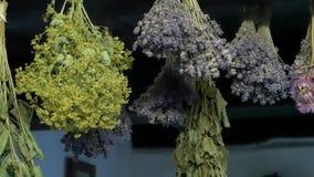 Wysuszeni ziele wieszający na suficie zbiory wideo