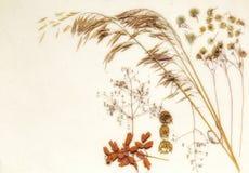 Wysuszona łąkowa trawa na piasku Zdjęcie Stock