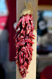 wysuszona chilies czerwień Fotografia Royalty Free