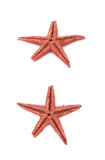 Wysuszona decorational gwiazdy ryba odizolowywająca Zdjęcie Stock