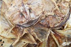 Wysuszona denna ryba na molu w porcie Hongkong Fotografia Stock