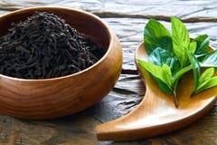 Wysuszona herbata z mennicą Obraz Royalty Free