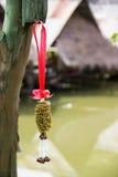 wysuszona jaśminowa girlanda wieszająca na drzewie Zdjęcie Royalty Free