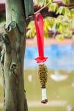 wysuszona jaśminowa girlanda wieszająca na drzewie Obraz Stock