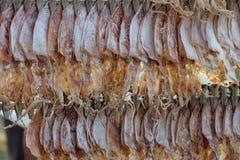 Wysuszona kałamarnica Zdjęcie Royalty Free