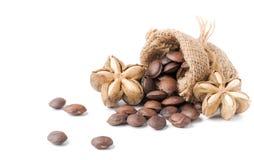 Wysuszona kapsuła sia owoc isoalted sacha-Inchi arachid Obraz Royalty Free