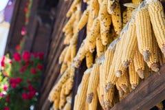 Wysuszona kukurudza Jako dekoracja w Austria obraz stock