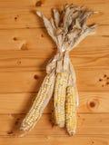 Wysuszona kukurudza na drewnianej ścianie Zdjęcie Royalty Free